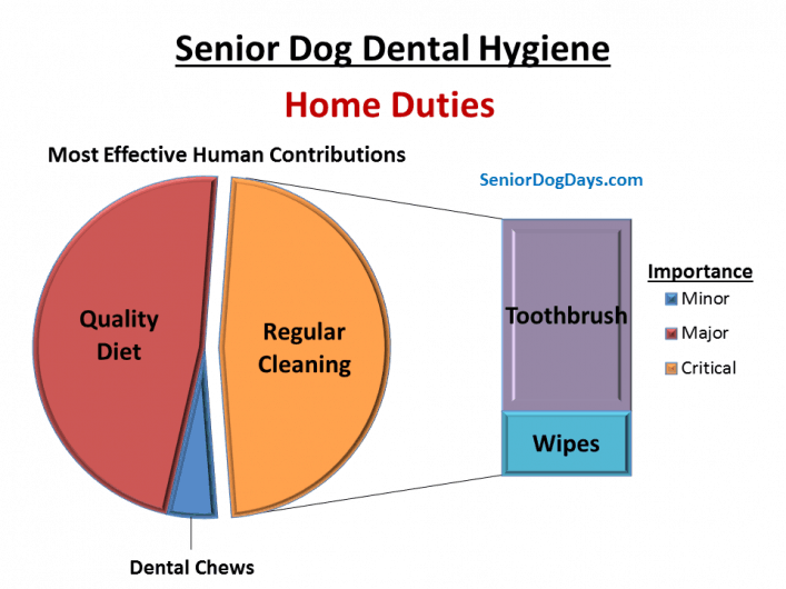 Chart explaining How to clean a dog's teeth at home and how to get rid of senior dog bad breath.  It charts diy dog dental wipes and toothbrush importance.