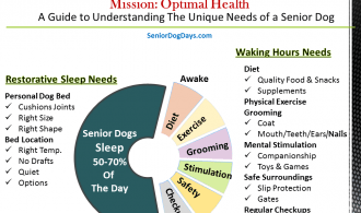 Chart Showing What do Senior Dogs Need