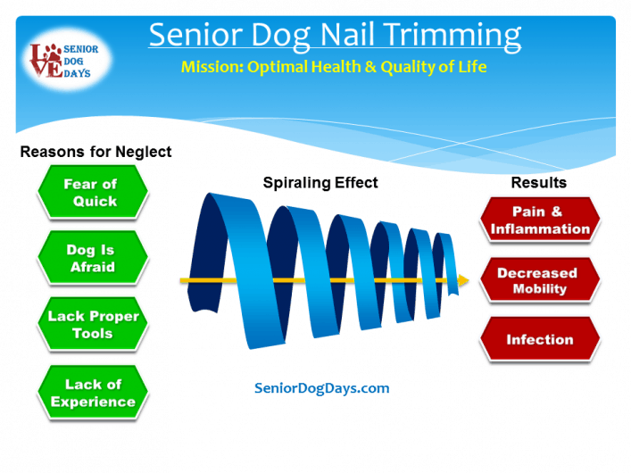 Senior dog nail trimming is part of keeping your dog in optimal health. This is a chart showing the effects of avoiding a senior dog nail trimming.
