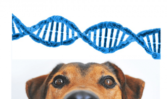 image showing dog and dna test