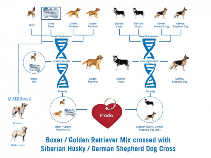 my dog's dna test results.  Is dog DNA test worth it?  I think yes.