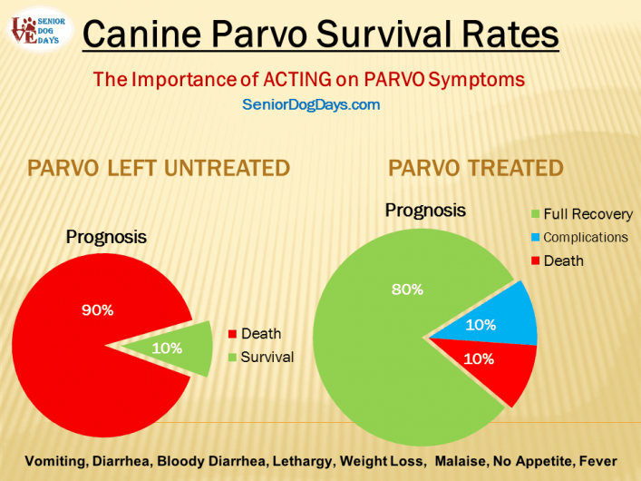 parvo in old dog charted prognosis