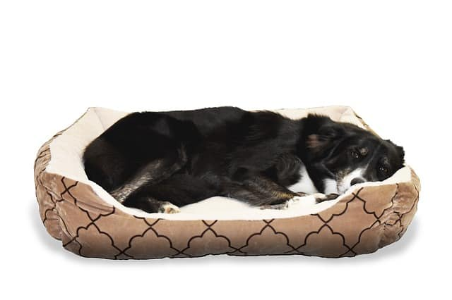 how many beds should a dog have