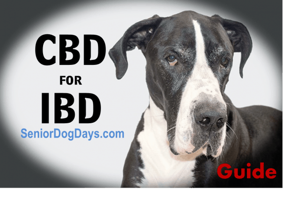 CBD for Dogs with IBD Product Review