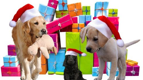 image shows dogs with gifts and shows owners how to get free dog stuff