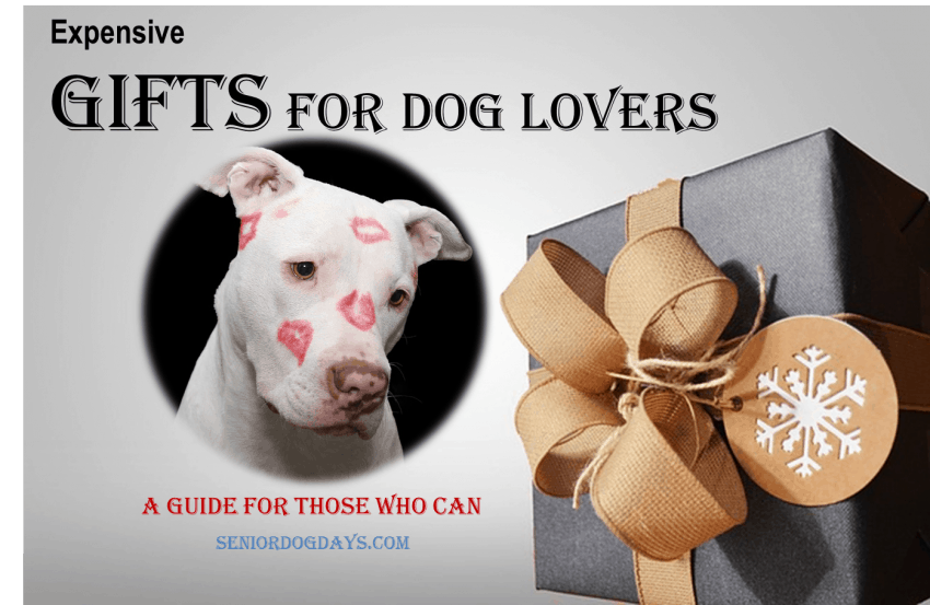 expensive gift for dog lovers review of what every dog owner wants but cannot afford.