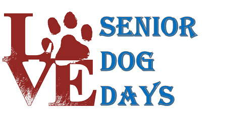 senior dog care everything you need to know about taking care of a senior dog at home